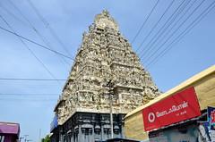 Kanchipuram, India (josepsalabarbany) Tags: mango tropical species streetlife victorian jewel rajput fort jodhpur thanjavur jaipur gopura church stupa mandapa shikhara amalaka kalasha parvati siva delhijodhpur oldcity apsara khajuraho konark ellora chennai gujarat mumbai goa mysore karnataka bangalore punjab amritsar jainism ranakpur kobalam uttarpradesh tajmahal fatehpursikri ghat ganges benares varanasi orchha maharashtra god ganesh vimana temple bengal tyger elephant curry journey travel sculpture sea rajasthan kerala delhi hindu moguls people sun architecture art asia india beach rathas kanchipuram nikond7000 josepsalabarbany