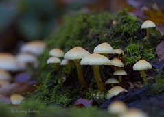 Autumn Mix (JKmedia) Tags: november macro green nature mushroom closeup forest canon moss woods decay fungi growth fungus toadstool produce canoneos7d ef100mmf28lmacroisusm boultonphotography