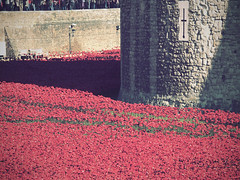 Field of Remembrance (davepickettphotographer) Tags: uk travel red london tourism photography olympus poppies gb british lands remembrance moat greatwar toweroflondon legion westminister cityoflondon em1 19141918 olympuscamera cityofwestminister 19141918war bloodswept