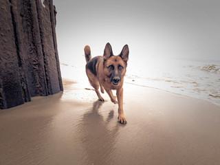 44/52   Beach Run