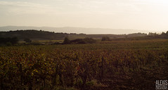 In the vineyards (Alexis Martinez Créations) Tags: sunset mountain fall vineyards aragon