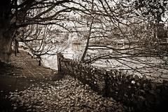 Winter Riverside Walk (paulinuk99999 - just no time :() Tags: christchurch bw riverside walk dorset paulinuk99999 sal1650f28