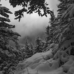 Chilled (Joshua Johnston Photography) Tags: blackandwhite snow oregon hiking mthood mthoodnationalforest hikingoregon canon6d canon35mmf2is joshuajohnston