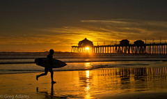 Sunset Surfer (Greg Adams Photography) Tags: california ca travel winter light sunset man beach silhouette reflections travels surf waves surfer shoreline silhouettes running calif shore wharf southerncalifornia huntingtonbeach surfcity 2014 silhouettephotography