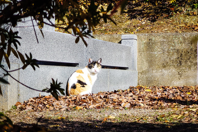 Today's Cat@2015-01-02