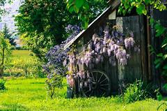 Printemps (Valrie Grcevic) Tags: france nature soleil photographie lumire vert animaux printemps vegetaion isre tullins valeriegrcevic