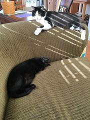 Cina & Ava (ShanMcG213) Tags: cats ava cat cina cinaandava