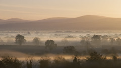 Misty morning (Rikspix1) Tags: ireland mist sunrise kildare
