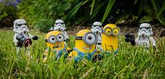 Minions vs stormtroopers (BUNDY PHOTOGRAPHY) Tags: kevin lego stormtroopers bob stuart minifigs minions minifigure legophotographer legohumour legography legominifiguren