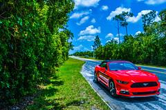 Mustang Everglades (Rafa Devesa) Tags: red verde green ford azul rojo nikon day florida miami dia cielo everglades mustang impacto d3200