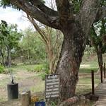 Killing Tree in Choeung Ek Genocidal Center Phnom Penh thumbnail