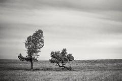 2 trees (Isra Fuentes) Tags: australia lugares oceana