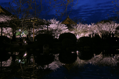 Cherry Trees in the Night