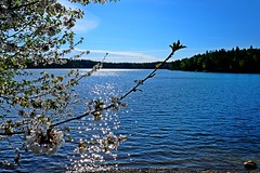 DSCF5290 (Peter Ghita) Tags: lake landscape spring seasons fujinonxf1855mmf284rlmois fujifilmxt1