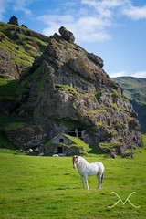 Icelandic Horse Posing In Front Of Cave House (Mike Ver Sprill - Milky Way Mike) Tags: world road trip travel blue horse house mountain plant mountains mike nature beautiful field grass animal animals rock way landscape photography see michael iceland big high amazing skies photographer sheep dynamic outdoor wildlife gorgeous hill nj surreal sunny best explore pony cave mountainside horn rams shelter grassland ever range milky hdr mv ver icelandic iclandic sprill versprill