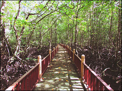 The Mangrove Forest (WiLL CWK) Tags: travel nature forest river landscape island photography woods scenery tour scenic mangrove malaysia langkawi kilim kedah mangroveforest geopark