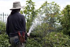 The  Constant Gardener (Joe Josephs: 2,650,890 views - thank you) Tags: nyc newyorkcity plants water gardens gardening centralpark hose worker urbanparks