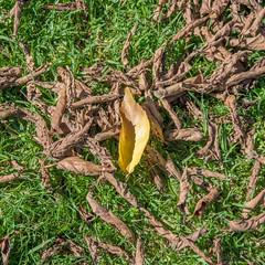 DSC_5097 (Scottmh) Tags: gardens nikon royal australia melbourne victoria botanic d7100