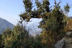 Durchblick (Alfesto) Tags: nepal trekking wanderung paiya cheplung
