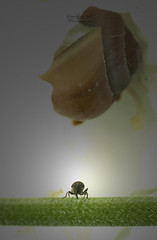 den Blickwinkel ndern (Sternschnuppes Welt) Tags: bug insekt kfer schneckenhaus blackbug snailhouse blickwinkel