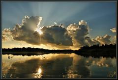 Hovering above (WanaM3) Tags: texas sony vista rays pasadena clearlakecity mudlake a700 sonya700 horsepenbayou wanam3