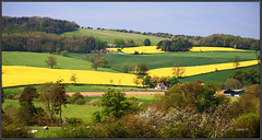 Spring Colours. . (Picture post.) Tags: trees horses green nature buildings landscape interestingness sheep blossom bluesky hills fields farms paysage arbre springtime oilseedrape arable