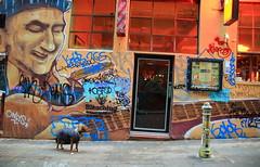 (Dhiren Adatia) Tags: camera blackandwhite dog monochrome animals canon graffiti melbourne patient canon5d laneway mansbestfriend dslr photogenic animallovers canonphotography melbournelaneways