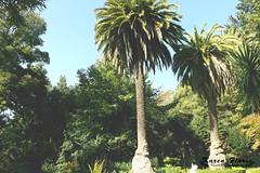 Palmera Parque de Lota (Anakaren_Floreshidalgo) Tags: summer photography palmera lota parquedelota