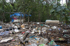 Dead fishes and trash at Lim Chu Kang Jetty, 10 Mar 2015 (wildsingapore) Tags: fish nature island death marine singapore underwater wildlife litter coastal shore threats farms mass intertidal seashore marinelife aquaculture wildsingapore limchukang massfishdeath