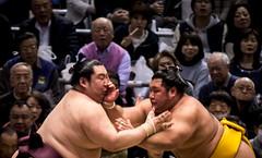 Sumo in Osaka-32 (Rodrigo Ramirez Photography) Tags: japan amazing traditional professional tournament osaka sumo yokozuna ozeki makuuchi hakuho sumotori sumotournament maegashira reikishi harumafuji topdivision