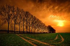 Bäume in Xanten (radonracer) Tags: feld spuren landschaft sonne bäume xanten acker niederrhein radspuren bazmreihe