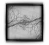 Sinapsi (guido.masi) Tags: blackandwhite holga colorado doubleexposure denver bn ilfordhp5plus400 biancoenero digitaldoubleexposure gfcn guidomasi analogicprint