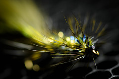 Struttin' Peacock (nrmiller) Tags: fly fishing tie flyfishing hook chenille streamer flytying hackle