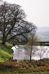 The Pond (warth man) Tags: landscape pond view peaceful hazy southlakeland nikon70300mmvr d7000