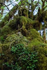 L'hamadryade (Collabois) Tags: nikon cairn chemin mousse pyrnes fes fougres d600 randonnes baronnies dryades gourguedasque