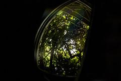 Desde mi ventana (edgarpcfotografia) Tags: reflejos naturaleza