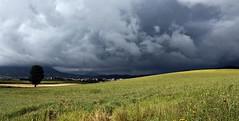 Storm (Gurutx) Tags: storm verde clouds heaven cielo nubes rbol tormenta campo caminodesantiago