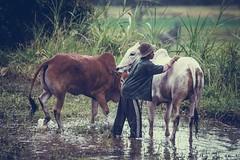 46_20160315-171410-_DSC5455 (trueforever) Tags: indonesia ibis bukittinggi padang novotel pagaruyung minangkabau jamgadang lembahharau westsumatera batusangkar tanahdatar ngaraisianok padangpanjang pacujawi padangpariaman