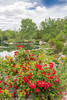 B36C6461 (WolfeMcKeel) Tags: park new city vacation flower nature water gardens garden mexico botanical spring high pond flora downtown desert landscaping albuquerque flowering 2016
