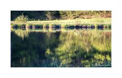 Mille tangs VII (francine koeller) Tags: reflection tree water pool eau reflet arbre franchecomt etang hautesaone 1000tangs