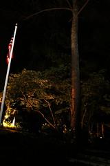 IMG_8656 (jalexartis) Tags: lighting nightphotography night yard dark landscape lights backyard landscaping shrub yucca shrubbery yuccaplant