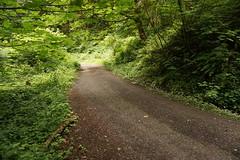 Nice gravel descent (Franklyn W) Tags: oregon portland pdx forestpark bikeriding nwportland twitter mixedterrain tumblr saltzmanroad