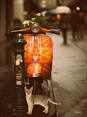 #FreeToEdit Good morning happy day   #photography #motorcycles #edit #art #collage #graphicdesign #cat #emotions #orange #artwork #freeart #photodesign #colorful #petsandanimals #vintage #popart #hdr #city #street #edited (mrbrooks2016) Tags: freeart collage vintage city freetoedit graphicdesign photography popart artwork emotions edited photodesign street hdr petsandanimals colorful art edit orange motorcycles cat