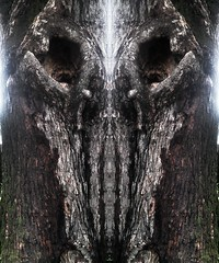 The Tree (rhonda_lansky) Tags: abstract tree art nature rain monster dark skull visions design scary eyes rainyday darkness faces outdoor earth michigan abstractart surreal poetic symmetry spooky fantasy soul expressive mirrored symmetrical monsters poems visual facial scaryface flipped nightmares darkart punisher thetree treeart shortstories naturescape spirtual faceart therain evilface lansky expressiveart abstractmirror symmetryart symmetricalart mirroredabstract surrealface michiganart mirroredart mirroredshapes abstractartdesign visualabstract rhondalansky shapesmirrored livingforces