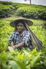 Srimangal-6149 (BohemianTraveler) Tags: asia tea bangladesh srimangal srimongol sreemangal
