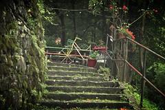 le vlo sous la pluie... (bulbocode909) Tags: fleurs rouge tessin suisse vert verdure vlos escaliers gandria forts
