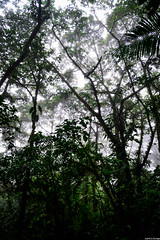Misty (JoanZoniga) Tags: travel viaje misty fog forest nikon rainforest costarica explore rainy neblina montaas discover puravida tenorio parquenacional volcantenorio bosquenuboso jczuniga