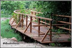 6266 - bridge, Eco Park,Adyar Poonga (chandrasekaran a 34 lakhs views Thanks to all) Tags: bridge india canon ladybug chennai pathway ecopark