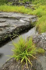 Fissures and Puddles (tsubame) Tags: japan rivers saitama arakawa nagatoro    japanesenature