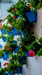 Hanging geraniums on the walls of old town Marbella (veik88) Tags: flowers sun landscape town spain nikon pots oldtown marbella nikon50mm nikond750